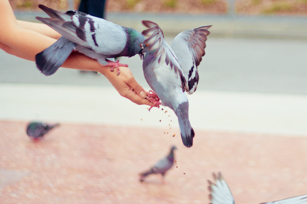 paulinefashionblog.com-pigeon-placa-catalunya_.jpg