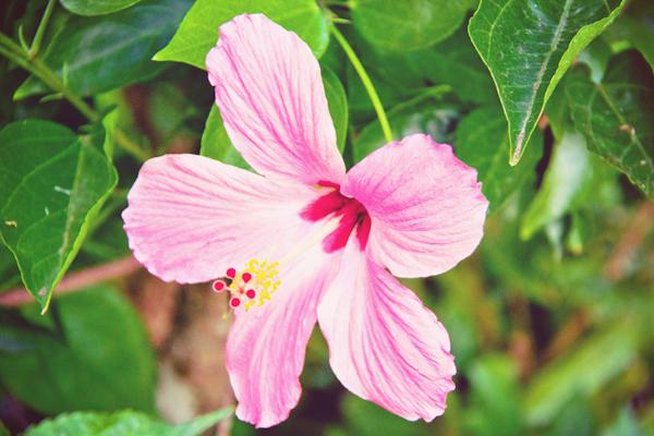 Assez Carnet de voyage : l'Ile Maurice, le carnaval de Flic en Flac et  PE28