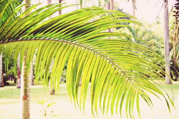 VOYAGE ILE MAURICE c paulinefashionblog.com  35 Carnet de voyage : l'Ile Maurice, le carnaval de Flic en Flac et la Mauritius Shopping Fiesta