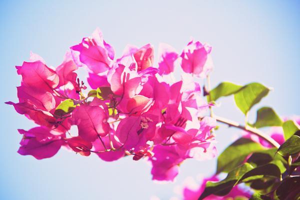 VOYAGE ILE MAURICE c paulinefashionblog.com  39 Carnet de voyage : l'Ile Maurice, le carnaval de Flic en Flac et la Mauritius Shopping Fiesta