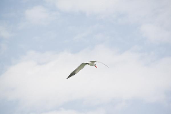 carnet-de-voyage-senegal-blog-PAULINEFASHIONBLOG.COM_-10.jpg