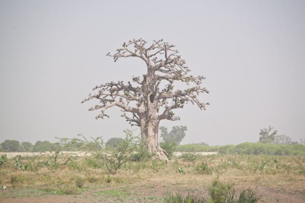 carnet de voyage senegal blog PAULINEFASHIONBLOG.COM  9 Carnet de voyage: le Sénégal